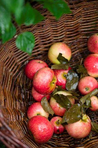 fedt med æble løg og timian