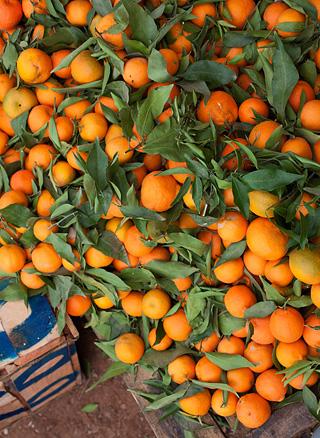 engelsk orangemarmelade opskrift