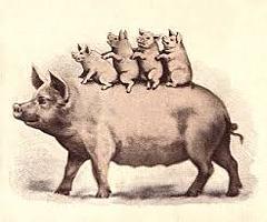 gamle tykke grise